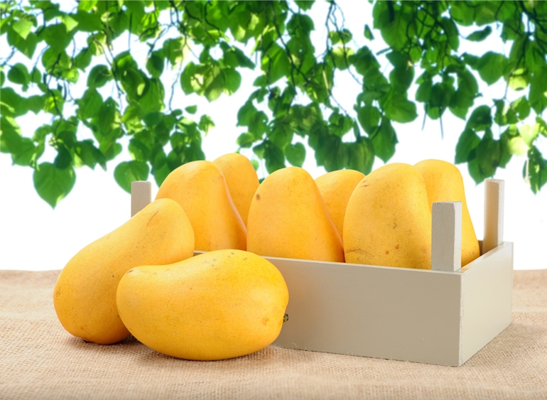 India – With the biggest bite of global mango business