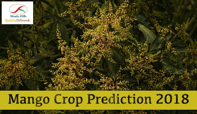 Mango Crop Prediction 2018